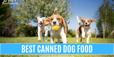 Best-Canned Dog Food 12