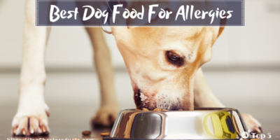 Best Dog Food For Allergies 11